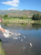 Wasatch Mountain State Park's pond has been stocked again with 300 pounds of fish.