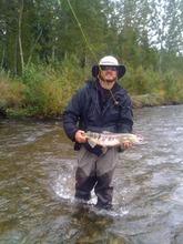 Chum salmon on the Montana River, Talkeetna, Alaska, Thursday, Aug. 30, 2012.