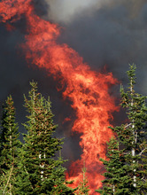 Flames burn pine trees as a wildfire spreads Sunday, Sept. 9, 2012 on Casper Mountain in Casper, Wyo. Residences and campgrounds were evacuated as the uncontained wildfire spread across the southeast portion of the mountain. (AP Photo/The Casper Star-Tribune, Alan Rogers)