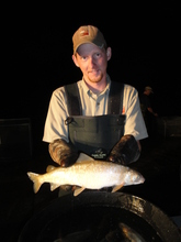 Courtesy photo Utah Division of Wildlife Resources technician Keith Holt with a fat whitefish Wednesday, Sept. 5, 2012.