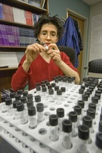 Associate professor of psychology and gender studies at the University of Utah, Lisa Diamond readies test tubes to be used in an upcoming experiment to measure hormone levels in human saliva.  Thursday, December 17,2009  photo:Paul Fraughton/ The Salt Lake Tribune
