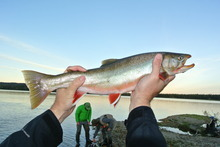 A beautiful Dolly Varden catches last light.