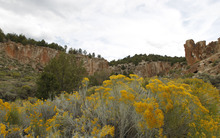 Al Hartmann  |  The Salt Lake Tribune Rabbit brush is in full bloom at Fremont Indian State Park.  Granger High art students explored the area to see and sketch petroglyphs at Fremont Indian State Park. Students took a field trip with the Center for Documentary Expression and Art to look at Native American rock art and artifacts at the park earlier this month. They will use that experience to inspire them to create their own Native American mural that will be housed in their new school building.