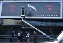 British musician Brian May as he stands on a cherry picker to launch the national Team Badger campaign, in front of a giant billboard, on Cromwell road, west London, Wednesday, Sept. 19, 2012. A rock star is facing off against British farmers, over badgers. The government has issued licenses for the country's first badger cull, and soon snipers will be roaming in search of the animals. But Queen guitarist Brian May is leading a band of badger defenders vowing to stop them. (AP Photo/Joel Ryan)