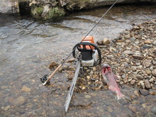 Three things every backcountry fishing adventure should include: a fly rod; a chainsaw and a salmon partially consumed by a grizzly bear.  |Brett Prettyman