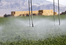 Al Hartmann  |  The Salt Lake Tribune Water sprays from an irrigation system onto an alfalfa field on the Dean Baker ranch on the Nevada-Utah state line. Western Utah has been hardest hit by the worst drought on record. The Bakers feel lucky because they can pump water from aquifers.