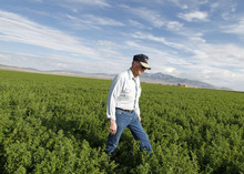 Al Hartmann  |  The Salt Lake Tribune Longtime farmer and rancher Dean Baker walks through one of his alfalfa fields near the Utah-Nevada state line. He and his farmer sons feel lucky that they have the means and the wells to keep water on crops even through what has been the deepest drought on record. He uses computerized circular sprinklers to efficiently water his crops of alfalfa, corn and barley.
