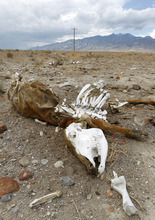 Al Hartmann    The Salt Lake Tribune A cow carcass rots in the desert near Callao, Utah, during a dry September. Ranching, farming -- and basic survival -- is a challenge in this bone-dry environment even in normal years. But western Utah has just recorded its driest 12-month period on record.