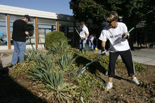 Francisco Kjolseth  |  The Salt Lake Tribune Cindy Bates joins other volunteers from 3M Health Information Systems and Holland & Hart as they help clean up the grounds at Kearns Junior High. Numerous volunteers pulled weeds in the courtyard, moved new tables to the science lab and  helped tutor students in math and reading as part of the state-wide United Day of Caring.