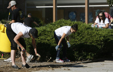 Francisco Kjolseth  |  The Salt Lake Tribune Volunteers from Holland & Hart and 3M Health Information Systems help clean up the grounds at Kearns Junior High on Thursday, September 13, 2012. Numerous volunteers pulled weeds in the courtyard, moved new tables to the science lab and  helped tutor students in math and reading as part of the state-wide United Day of Caring.