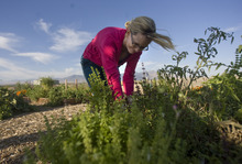 Kim Raff | The Salt Lake Tribune Lisa Reid works in her garden plot at the Dancing Moose Montessori School that was created with the help of Probar, an organic snack company in West Valley City.