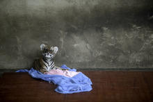 A tiger cub rests at a nursery room at the Shanghai Zoo in Shanghai, China, Thursday Oct. 4, 2012. (AP Photo/Eugene Hoshiko)