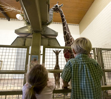 Lennie Mahler  |  The Salt Lake Tribune Emmi, 5, and Jack, 3, watch the 11-day-old calf, right, and mother, Kipenzi, at Hogle Zoo in the giraffe cages Wednesday, Oct. 3, 2012. The new female giraffe currently measures in at six feet tall and is yet to receive a name.