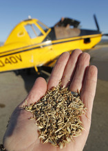 Al Hartmann  |  The Salt Lake Tribune Seed mixture of native and non-native grasses to be loaded on planes to be spread from the air across area burned during this summer's Wood Hollow Fire near Mount Pleasant.