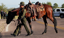 U.S. Border Patrol agent Nicholas Ivie's riderless horse with boots set backward in honor of the slain agent is seen during the funeral procession on Monday, Oct. 8, 2012, at The Church of Jesus Christ of Latter-day Saints in Sierra Vista, Ariz.  The head of the U.S. Border Patrol agents' union says the agent was killed when he  apparently opened fire on two colleagues thinking they were armed smugglers and was killed when they returned fire.    (AP Photo/Arizona Daily Star,Mike Christy )  ALL LOCAL TV OUT; PAC-12 OUT; MANDATORY CREDIT