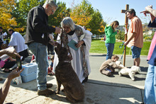 Chris Detrick  |  The Salt Lake Tribune Vicar Lyn Briggs blesses Sophie, 5, a goldendoodle from Bountiful, as owner Steve Ober watches, during the Blessing of the Beasts at the Episcopal Church of the Resurrection in Centerville Saturday October 6, 2012. This annual event was a continuation of the commemoration of St. Francis of Assisi and his love of all creatures.