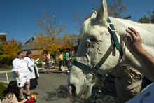 Chris Detrick  |  The Salt Lake Tribune Desert Storm, 29, of West Bountiful, participates during the Blessing of the Beasts at the Episcopal Church of the Resurrection in Centerville Saturday October 6, 2012. This annual event was a continuation of the commemoration of St. Francis of Assisi and his love of all creatures.
