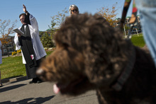 Chris Detrick  |  The Salt Lake Tribune Priest Associate Steve Andersen blesses animals during the Blessing of the Beasts at the Episcopal Church of the Resurrection in Centerville Saturday October 6, 2012. This annual event was a continuation of the commemoration of St. Francis of Assisi and his love of all creatures.
