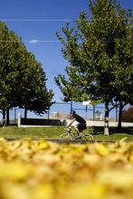 Kim Raff |  The Salt Lake Tribune A bike rider travels west on Sunnyside Avenue in Salt Lake City on Sunday, October 14, 2012. In January, Mayor Ralph Becker, as part of his