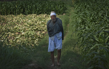 An elderly Egyptian farmer looks on at Gazeerat al-Dahab, 'The island of Gold' in Cairo, Egypt, Thursday, Oct. 18, 2012. (AP Photo/Khalil Hamra)