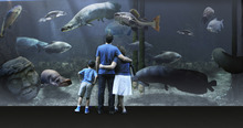 A digital rendering for The Loveland Living Planet Aquarium shows a 35,000 gallon tank featuring giant fish from the Amazon. Courtesy: The LIving Planet Aquarium