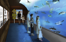 A digital rendering of a 75,000 gallon penguin tank at The Loveland Living Planet Aquarium. Courtesy: The LIving Planet Aquarium