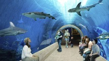 A digital rendering for The Loveland Living Planet Aquarium shows a 40-foot shark tank tube where guests can sit and watch the sharks swim all around them. Courtesy: The LIving Planet Aquarium
