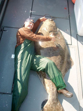 (Submitted by Richard Clayton)  A 500-pound halibut caught off the coast of Juno, Alaska.