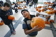 Scott Sommerdorf  |  The Salt Lake Tribune               Parker Overton, 15, hefts his heavy pumpkin as children at the Kauri Sue Hamilton School in Riverton got a special Halloween delivery from an unlikely source, Monday, Oct. 21, 2012. More than 3,500 pumpkins harvested, gathered, and cleaned by Utah State Prison inmates in the Utah State Prison's Greenhouse program were donated to various organizations that serve children.