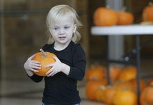 Scott Sommerdorf  |  The Salt Lake Tribune               Two year old Emma Pritchett has chosen her pumpkin as children at the Kauri Sue Hamilton School in Riverton got a special Halloween delivery from an unlikely source, Monday, Oct. 21, 2012. More than 3,500 pumpkins harvested, gathered, and cleaned by Utah State Prison inmates in the Utah State Prison's Greenhouse program were donated to various organizations that serve children.