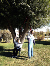 Someone put up this effigy of Mitt Romney hanging President Barack Obama from a tree at a home in Orangeville.